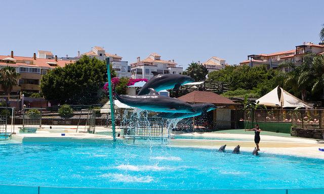delfinarij-selva-marina
