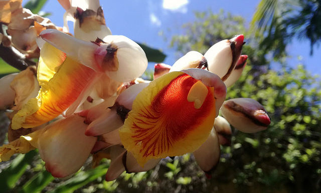 Ботанический сад Пуэрто-де-ла-Крус